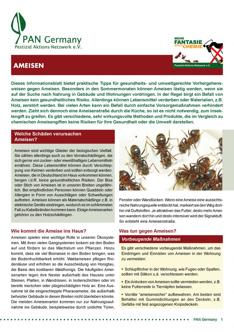 Informationsblatt Ameisen